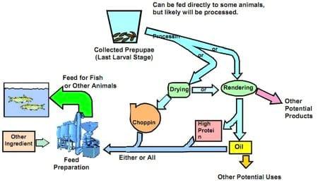 how to make a maggot farm pdf