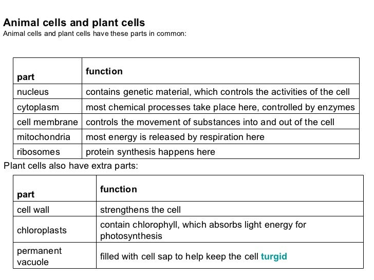 list of animal cell organelles and their functions pdf