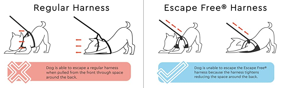 gooby simple step in harness instructions