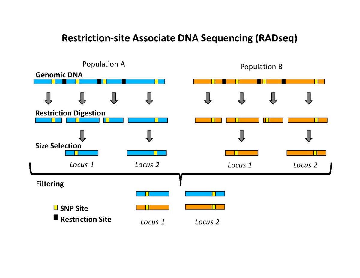 genetic markers pdf