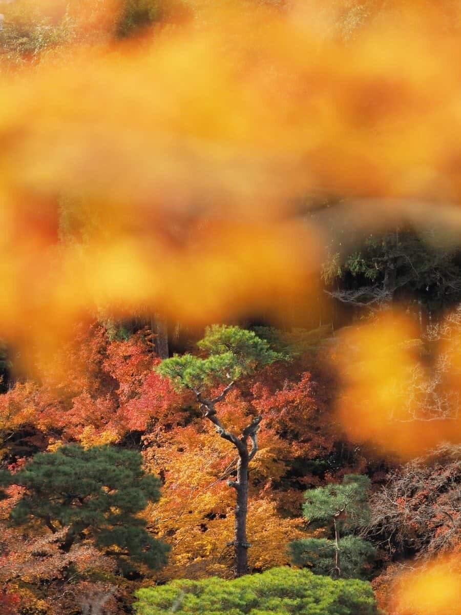 hokkaido travel guide